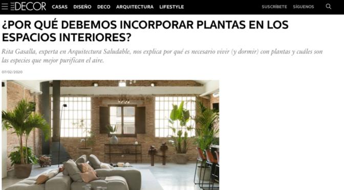 ¿Por qué debemos incorporar plantas en los espacios interiores? (Elle Decor)